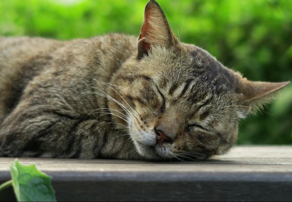 讀心/「貓喜歡和你睡的五個原因」 看完心暖卻有點心酸...